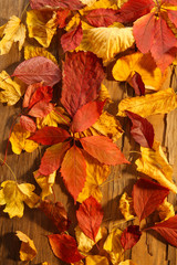 Background of red and yellow autumn leaves on wooden table, close-up