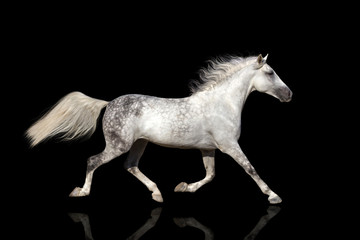 Horse with long mane isolated on black background