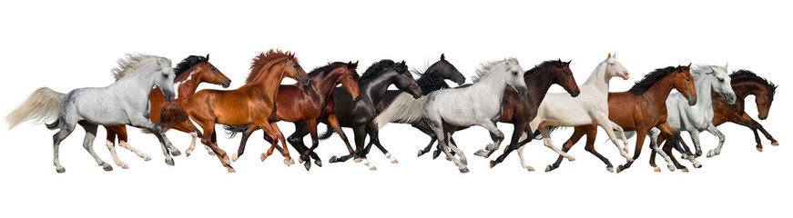 Horse herd isolated on white, banner for website