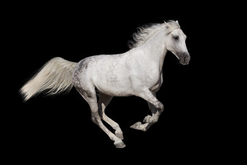Horse with long mane isolated on black background
