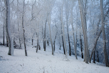 Frosty cold winter forest