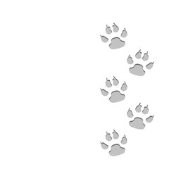 Dog animal traces on snow. White isolated background.