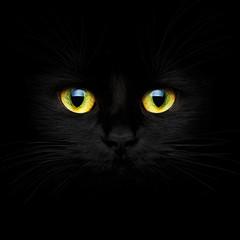 Fototapeta Cute muzzle of a black cat obraz