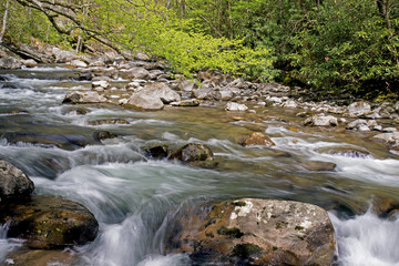 White water stream in spring in The Smokies.