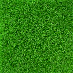 Green lawn grass background texture close-up. 3d render