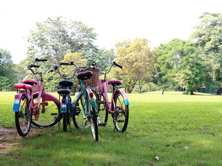 Bicycles Parked On Lawn
