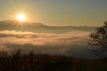 Grass fog and the morning sun light.
