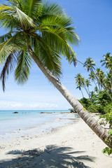 Palm trees cast shadows on rustic remote tropical Brazilian island beach in Bahia Nordeste Brazil