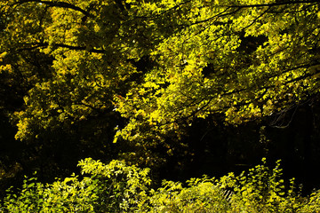 Beautiful autumn yellow-green forest