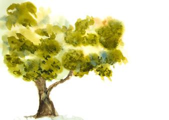 Single green tree, watercolor painting