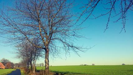 Feld und Baum Landschaft