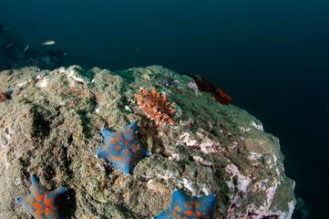 Sea slug on the rock