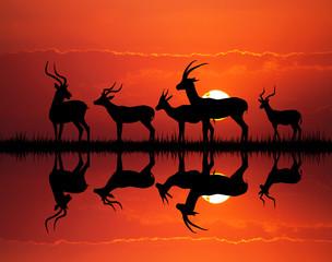 Photo sur Plexiglas Rouge gazelle silhouette in African landscape