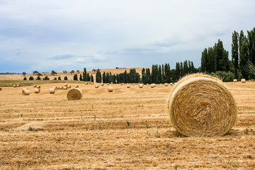 Large round bales of hay and straw in paddock after harvest.