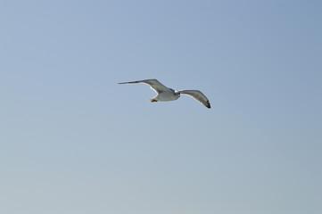 Single seagull in blue sky