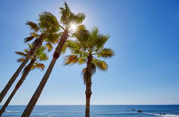 Laguna Beach, Palmen 01