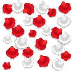 an image which shows the red and white rose petals on white background