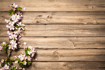 Apple blossoms on wooden surface. Spring background