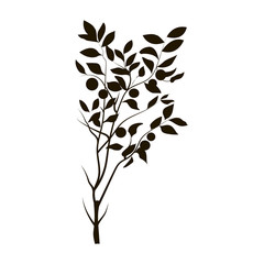 The image of plants on a white background