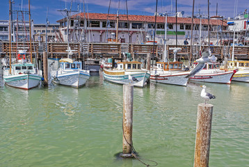 Line of Colorful Sailing Boats at Fishermans Wharf of San-Franci
