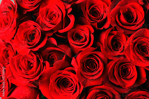 Wall mural red rose background