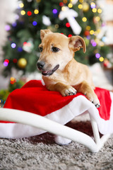 Small cute funny dog laying at white sleigh on Christmas tree background