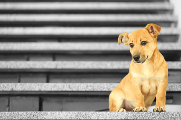Small cute funny dog on stairs