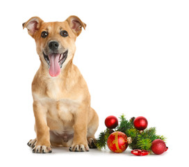 Small funny cute dog with Christmas toys, isolated on white