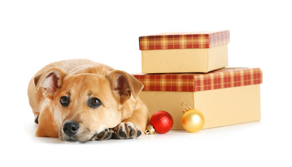 Small funny cute dog on table with gifts and Christmas toys, isolated on white