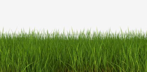 3d illustration horizon grass lawn