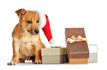Small funny cute dog with Santa hat and gift boxes, isolated on white