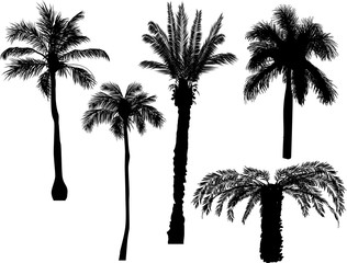five palm silhouettes isolated on white
