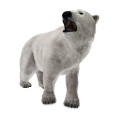 Polar Bear on White