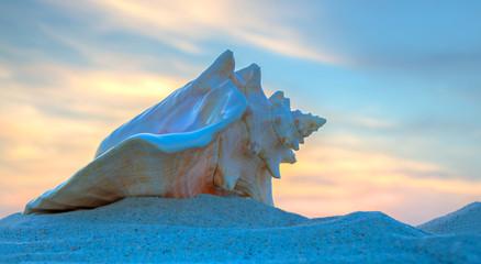 Big sea shell on the sunset
