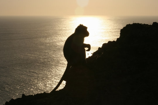 Silhouette of a monkey sitting on a rock