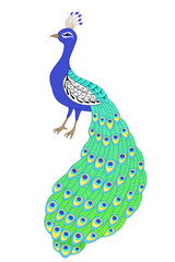 Peacock bird blue green yellow isolated illustration vector