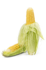 Two fresh young ears of corn isolated on a white background
