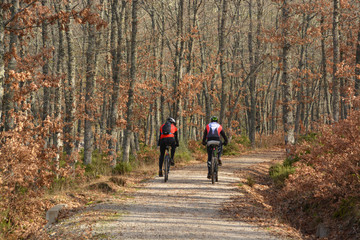 ruta en bicicleta a través del bosque