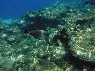 Рыбы красивые под водой