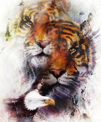 tiger with eagle and ornamental mandala. wildlife animals on painting background, Eye contact. Brown, orange, black and white color.