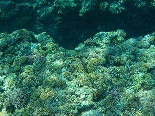 沖縄県 慶良間諸島の海中