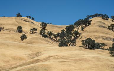 California Coast Ranges grass hills