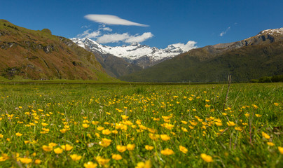 majestic landscape with  meadows and blooming flowers