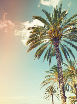 Palm trees over cloudy sky background, old style