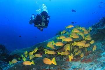 Scuba divers diving on coral reef