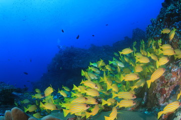 Underwater coral reef and tropical fish