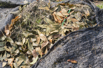 Heap of dry leaves and waste