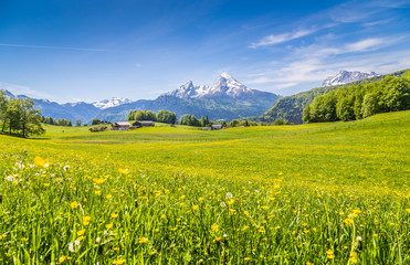 Fototapete - Idyllic landscape in the Alps with green meadows and flowers