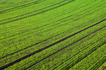 Abstract fields lines