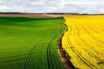 Colorful patterns in the fields